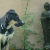 kaely-my-dog-with-garden-buddha