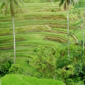 100 Year old Rice Terraces