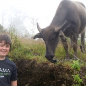Daniel my Son and Water Buffalo
