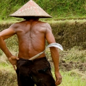Rice Farmer in Western Bali